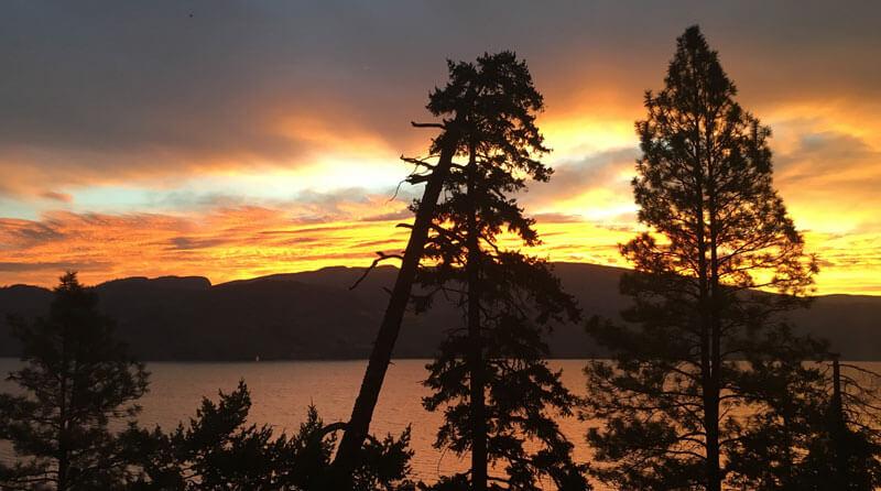 Sunrise Pineacre